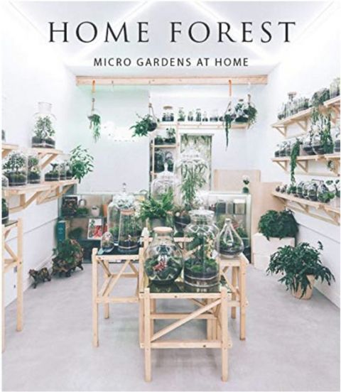 Home Forrest Interior Micro Gardens